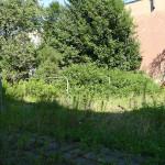 Garten in der Stadt :: Umformen zu essbarem Hinterhof :: das Grün nutzen